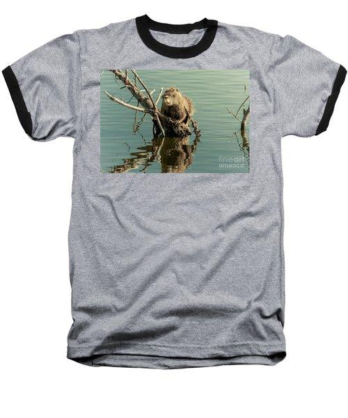 Nutria On Stick-up Baseball T-Shirt by Robert Frederick