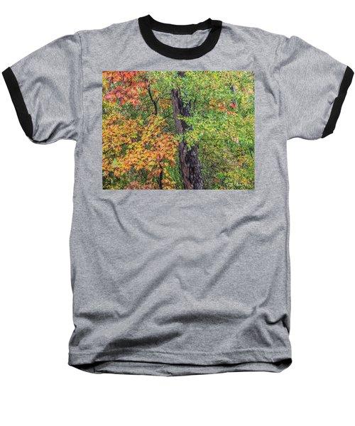 Oak Hickory Woodland Baseball T-Shirt by Tim Fitzharris