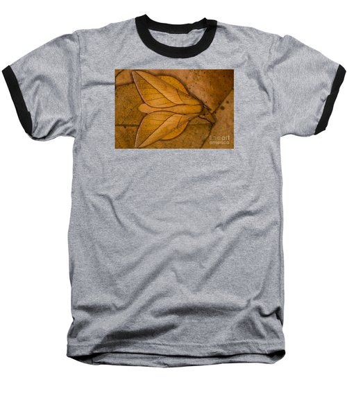 Oiticella Convergens Moth Baseball T-Shirt by Gabor Pozsgai