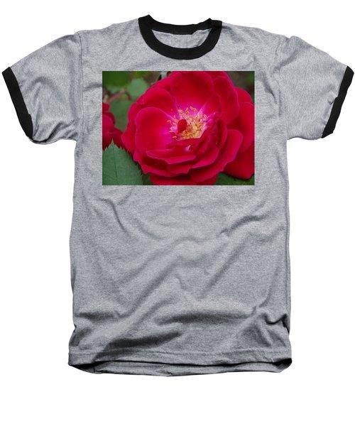 Old Homestead Rose Baseball T-Shirt