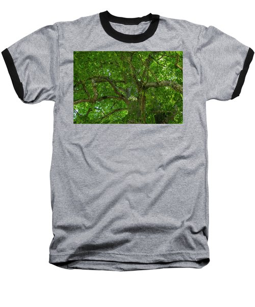 Old Linden Tree. Baseball T-Shirt