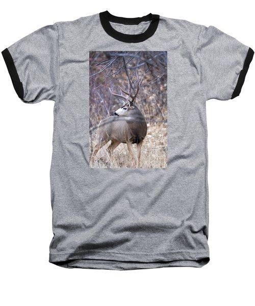 Old Orchard Baseball T-Shirt