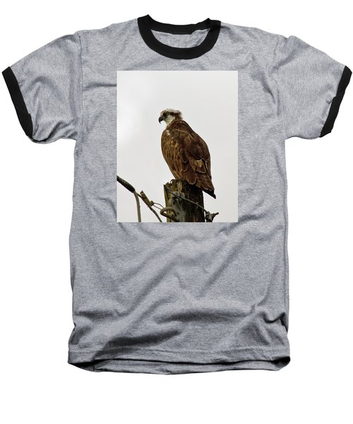Ollie, The Osprey Baseball T-Shirt
