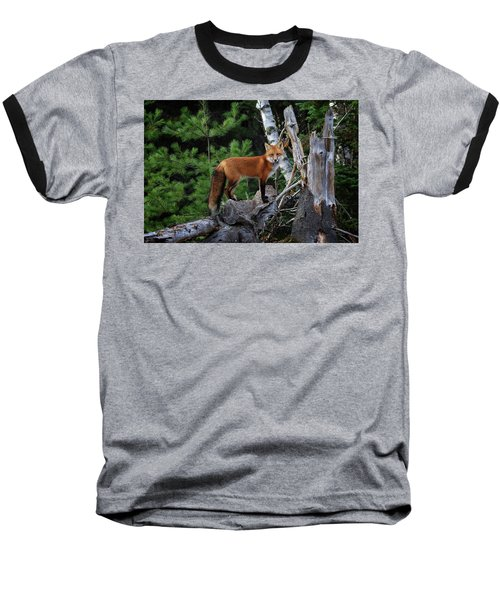 On The Lookout Baseball T-Shirt by Gary Hall