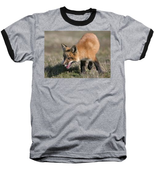 Baseball T-Shirt featuring the photograph On The Prowl by Elvira Butler
