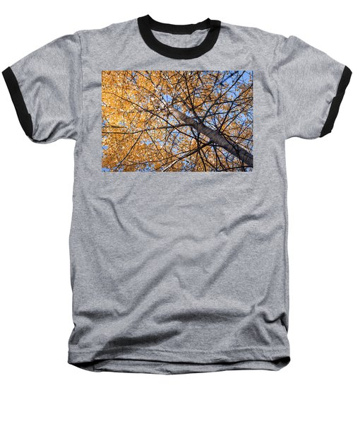 Orange Autumn Tree. Baseball T-Shirt by Teemu Tretjakov