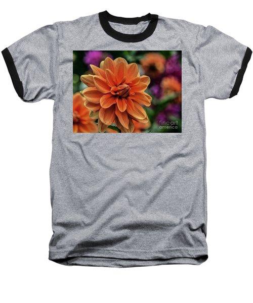 Orange Dahlias Baseball T-Shirt by Shirley Mangini