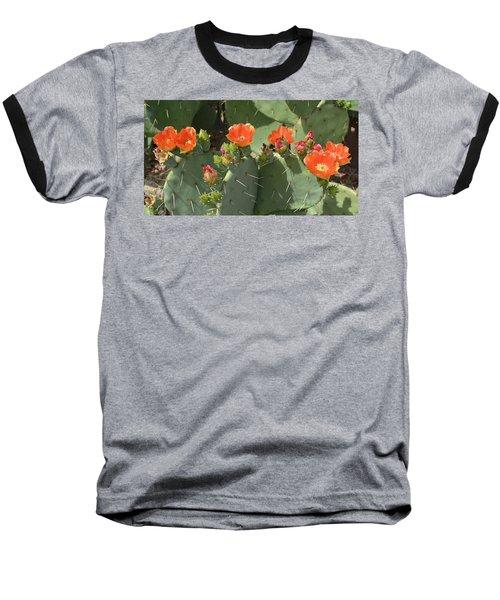 Orange Dream Cactus Baseball T-Shirt by Aimee L Maher Photography and Art Visit ALMGallerydotcom