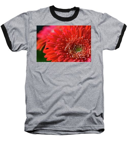 Baseball T-Shirt featuring the photograph Orange Gerbera by Clare Bambers