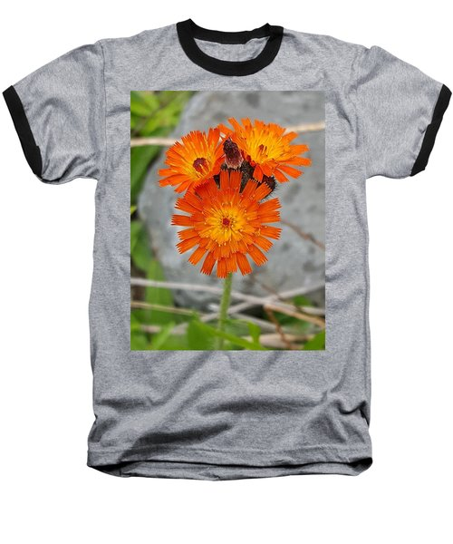 Orange Hawkweed Baseball T-Shirt