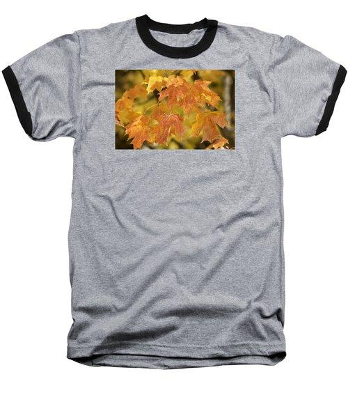 Orange Maples Baseball T-Shirt