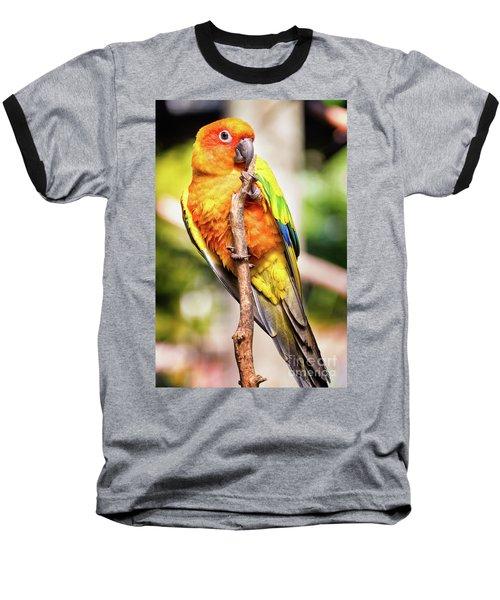 Orange Yellow Parakeet Baseball T-Shirt by Stephanie Hayes