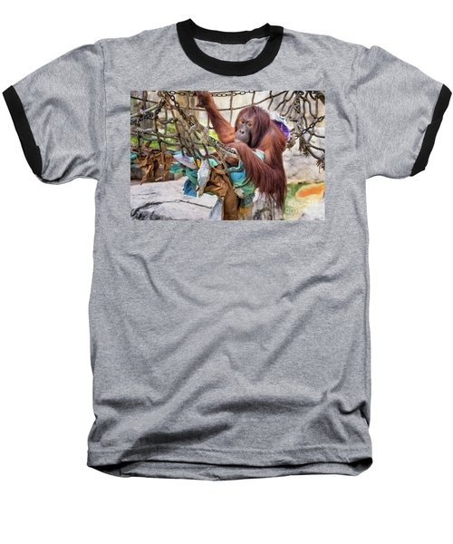Orangutan In Rope Net Baseball T-Shirt by Stephanie Hayes