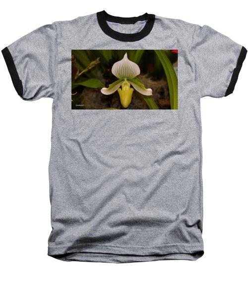 Orchid Flower 42 Baseball T-Shirt by Gary Crockett