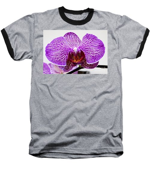 Orchid Baseball T-Shirt by Tim Townsend
