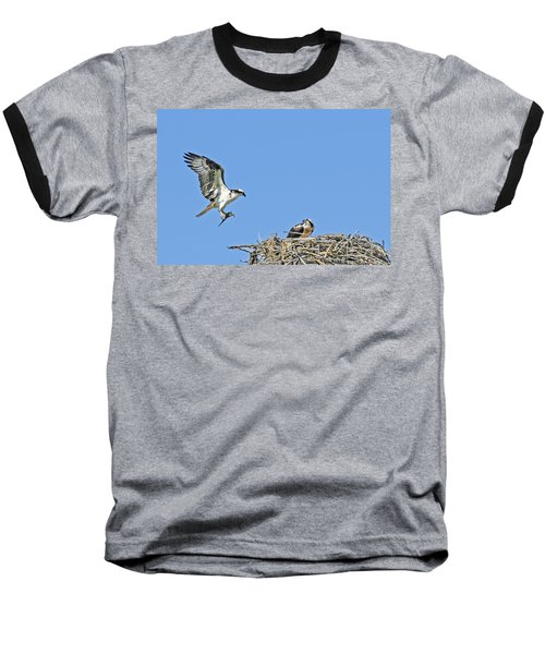Osprey Brings Fish To Nest Baseball T-Shirt
