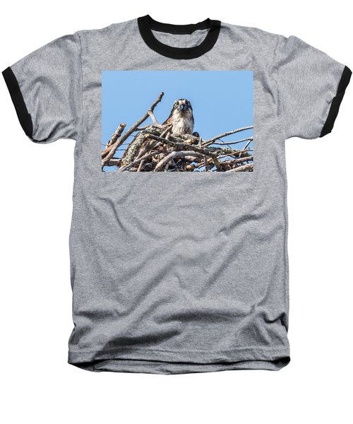 Osprey Eyes Baseball T-Shirt by Paul Freidlund