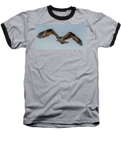 Osprey Flying Baseball T-Shirt by Paul Freidlund