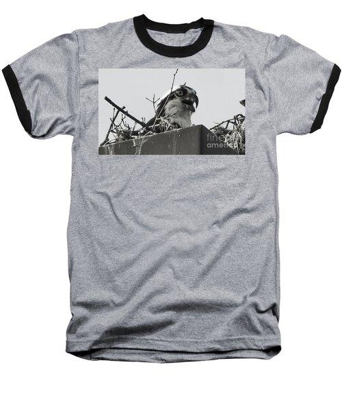 Osprey In Nest Baseball T-Shirt