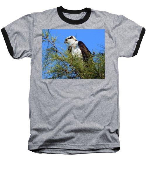 Osprey In Tree Baseball T-Shirt