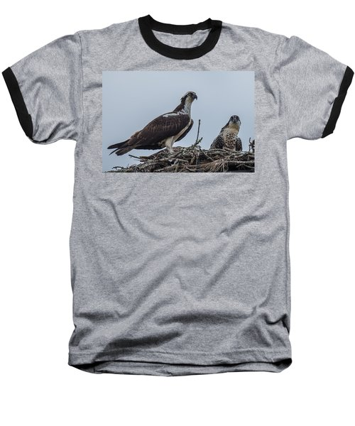 Osprey On A Nest Baseball T-Shirt by Paul Freidlund