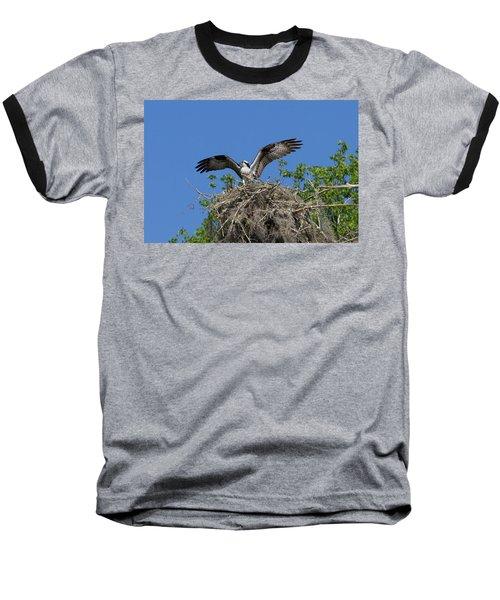 Osprey On Nest Wings Held High Baseball T-Shirt