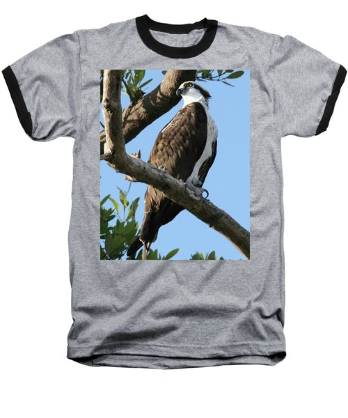 Osprey - Perched Baseball T-Shirt by Jerry Battle