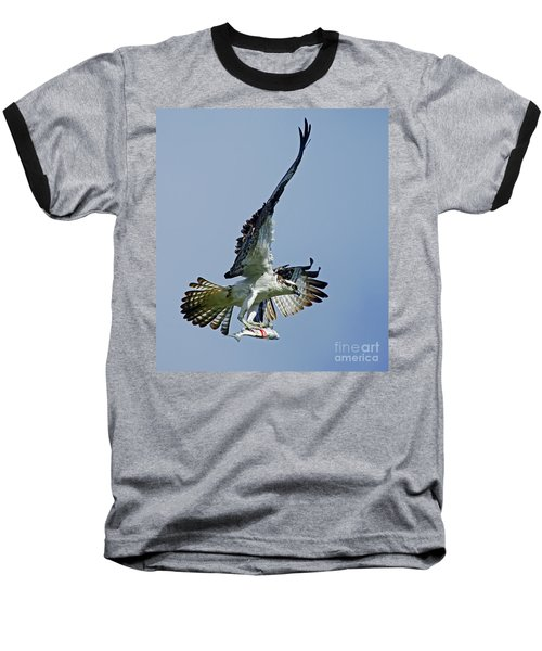 Osprey Success Baseball T-Shirt by Larry Nieland
