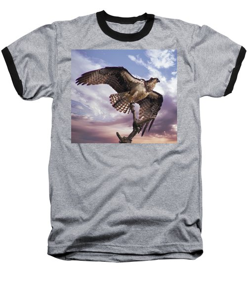Osprey Wing Baseball T-Shirt
