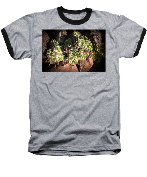 Out Door Succulents Baseball T-Shirt by Catherine Lau