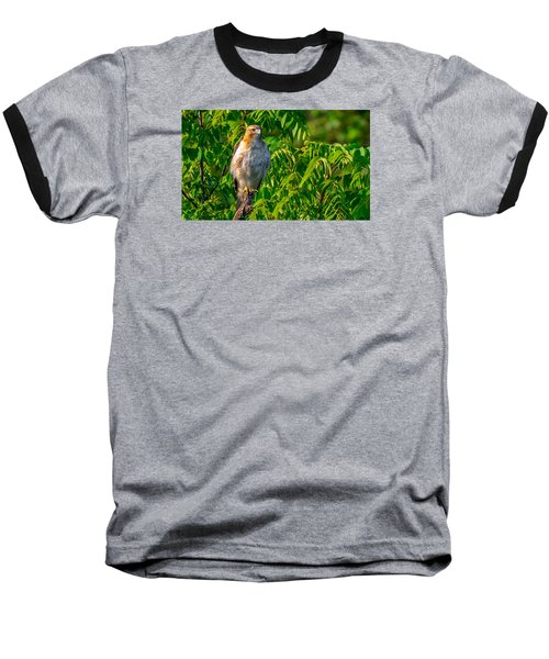 Out On A Limb 3 Baseball T-Shirt