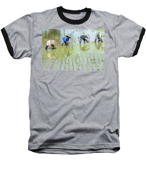 Paddy Field 1 Baseball T-Shirt by Werner Padarin