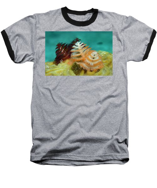 Baseball T-Shirt featuring the photograph Pair Of Christmas Tree Worms by Jean Noren