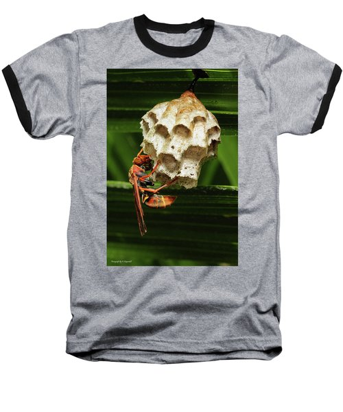 Paper Wasps 00666 Baseball T-Shirt by Kevin Chippindall