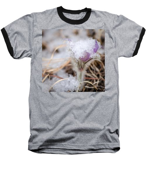 Pasqueflower In The Snow Baseball T-Shirt