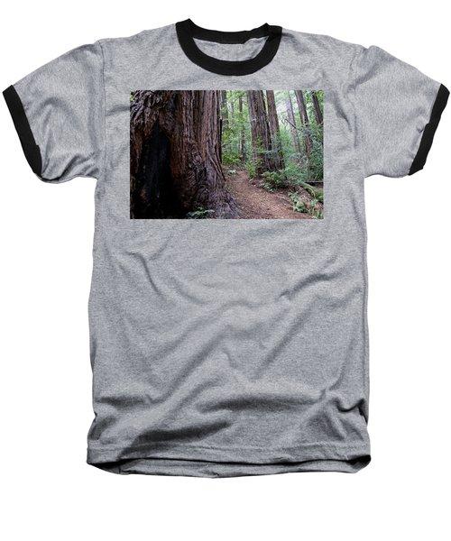 Pathway Through A Redwood Forest On Mt Tamalpais Baseball T-Shirt