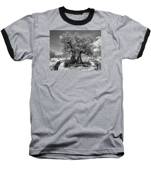 Patriarch Olive Tree Baseball T-Shirt by Alan Toepfer