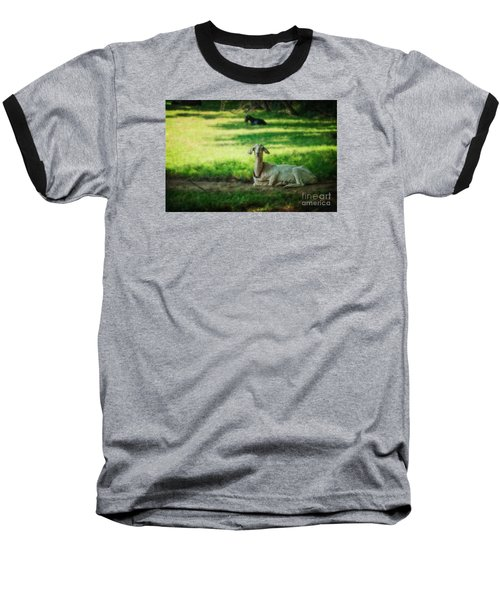 Peaceful Pasture Baseball T-Shirt