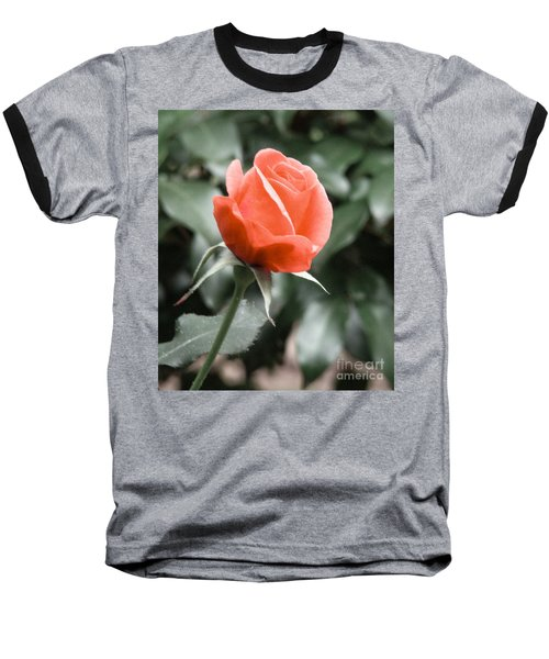 Peachy Rose Baseball T-Shirt by Rand Herron