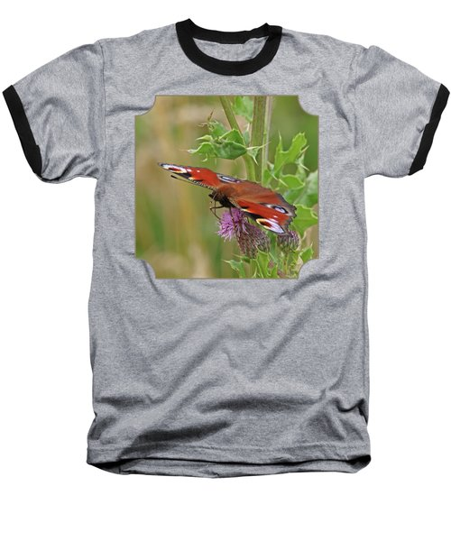 Peacock Butterfly On Thistle Square Baseball T-Shirt by Gill Billington