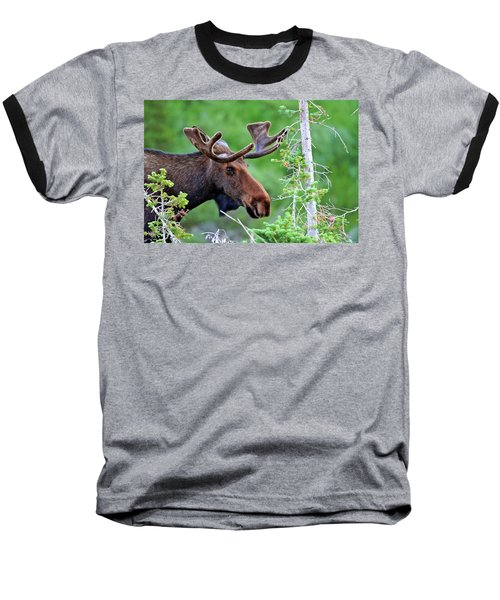 Baseball T-Shirt featuring the photograph Peaking Moose by Scott Mahon