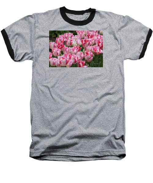 Peppermint Tulip Field IIi Baseball T-Shirt