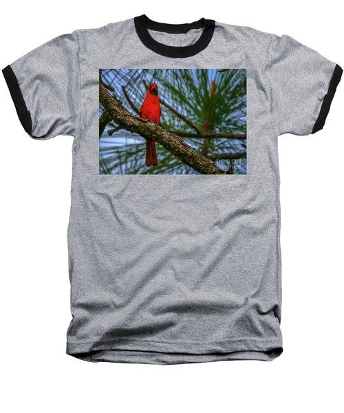 Perched Cardinal Baseball T-Shirt