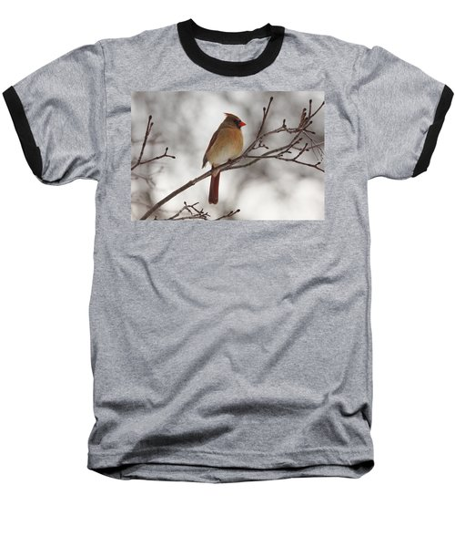 Perched Female Red Cardinal Baseball T-Shirt