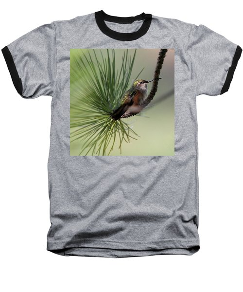 Perched In A Pine Baseball T-Shirt