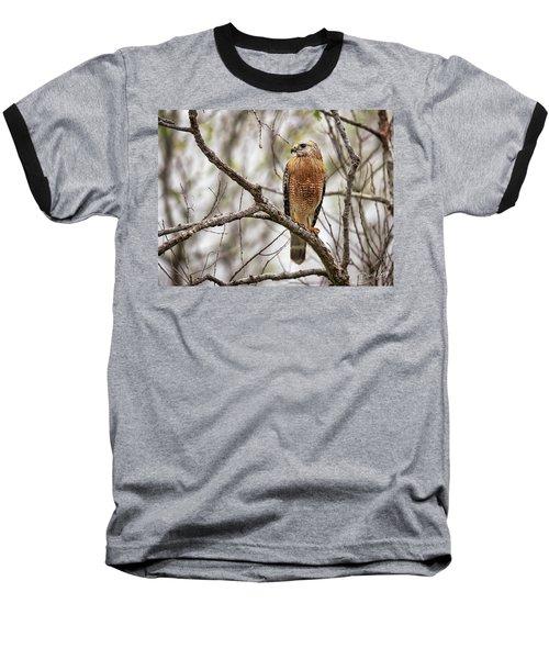 Perched Red Shouldered Hawk Baseball T-Shirt