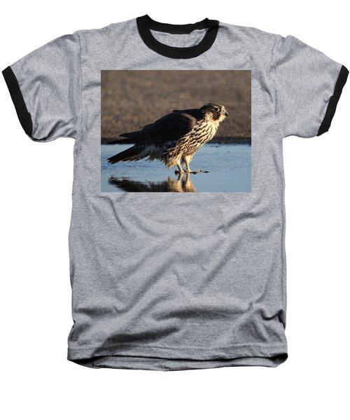 Peregrine Falcon Shirley New York Baseball T-Shirt by Bob Savage