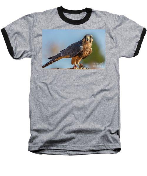 Peregrine Falcon Wildlife Art By Kaylyn Franks Baseball T-Shirt
