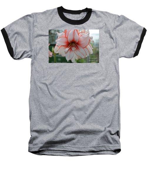 Perfect Amarylis Baseball T-Shirt by DejaVu Designs