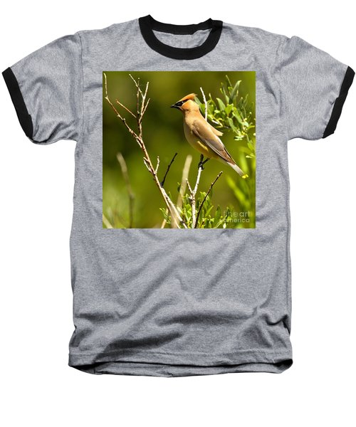 Perfectly Perched Baseball T-Shirt by Adam Jewell